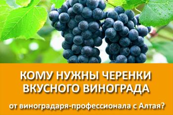 Последний шанс заказать черенки винограда в этом сезоне!